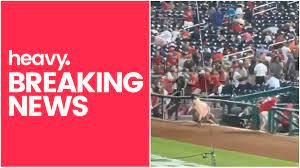 Washington Nationals Game Panic Due to ...