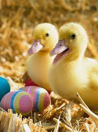 768x1024 Ducklings and Easter Eggs Ipad ...