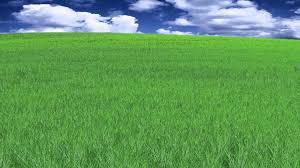 Natural Beautiful Grass Animation YouTube