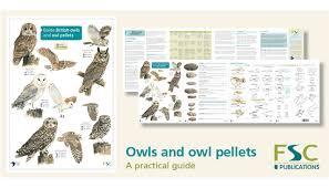 Fsc Owls And Owl Pellets Identification Chart