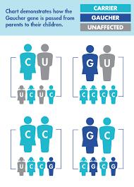 Gaucher Disease Inheritance Genetics National Gaucher