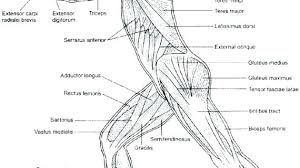Human Anatomy Coloring Pages Anatomy Coloring Pages The Anatomy