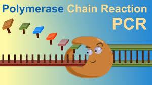 Pcr Polymerase Chain Reaction Iqog Csic Youtube