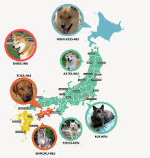map of where anese dog breeds are located