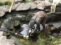 Diy Pond 10 Most Common Diy Pond Building Mistakes Baltimore Maryland