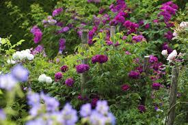ways to create an eco friendly garden