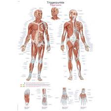 Trigger Points On The Body Poster