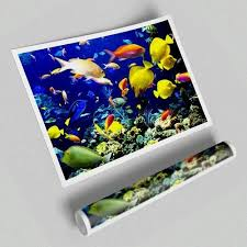 East Urban Home Fotodruck Tropische Fische unter Wasser | Wayfair.de -  #fish #east #fische #fotodruck #home #tropicalfis… in 2020 | Tropical fish,  Colorful fish, Betta fish