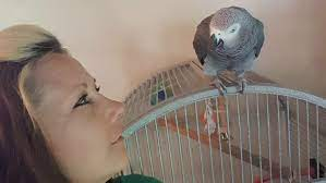 UPDATED: Michigan woman convicted of murder in parrot witness case | CBC  Radio