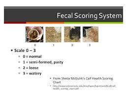 Fecal Scoring Chart Health And Disease In Calves And Heifers Overview Common