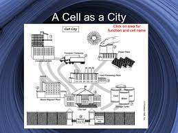 Cell City Analogy Examples Cell Analogy Project