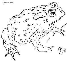 Small Picture Beautiful Coloring Pages Frogs Toads Pictures New Printable