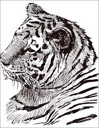 Dessin Colorier Gratuit F Lin Tigre Artherapie Ca