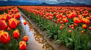 Flower Full Hd Scenery Wallpaper