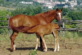 Foal Feeding