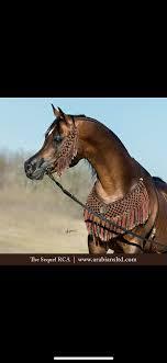 Pin by Arthaya Finley on Things I love | Beautiful horses, Pretty ...