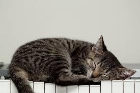 cute kittens sleeping on pianos. Delighful Cute For Cute Kittens Sleeping On Pianos A