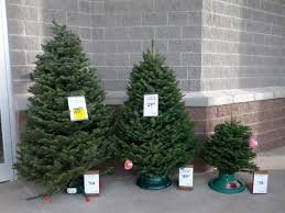 Lowe's Christmas Trees