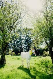 all the pretty horses tai snaith the last hurrah 2012