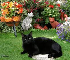 Image result for black cats with flowers
