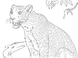 Cute Leopard Coloring Page Free Printable Coloring Pages