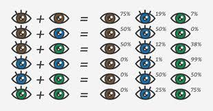 Heavenly Baby Eye Color Chart Equipstudio Club