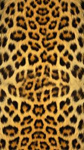 collection of cheetah background pictures on hdwallpapers