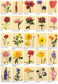 pictures of flowers and their names kinds of flowers list pictures reference pictures