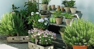apartment herb garden. Apartment Herb Garden J