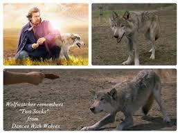 two socks dances wolves two socks from dances wolves  two socks dances wolves two socks from dances wolves