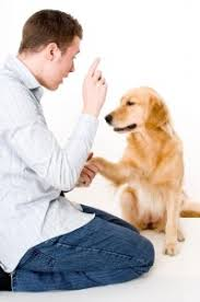 Домашние животные.Советы экспертов из первых рук   ВКонтакте