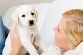 how to prepare for a new puppy