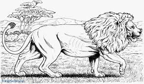 lion coloring pages for s mountain