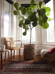 Beautifully Indoor Plant In Sunroom