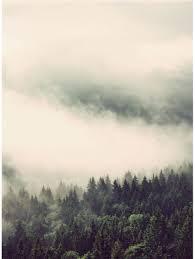 Bolcom Fotobehang Mist In Het Bos 192x260 Cm Topkwaliteit