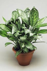 Awesome Best Indoor Plants