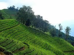 Best 5 Hill Stations in South India | Hoteldekho Blog