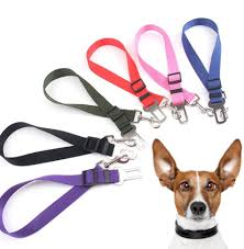 top 10 largest 6 cm leash ideas and get free shipping - a273