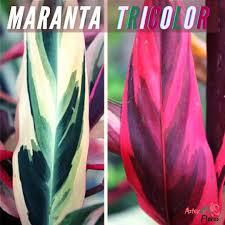Conheça as plantas que conquistaram os millennials (foto: Calateiagv Explore Facebook