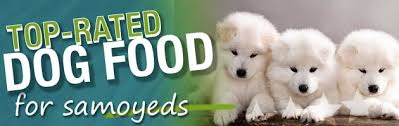 What Is The Best Dog Food For A Samoyed Dog Food Guru