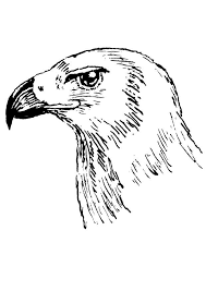 Kleurplaat Roofvogel Vogel Singt Ausmalbild Malvorlage Comics