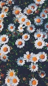 Tumblr Flower Wallpapers - Top Free ...
