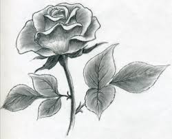 Small Picture Draw a Rose Quickly Simply And Easily
