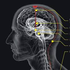 Tips Cara Agar Otak Berpikir Lebih Cepat