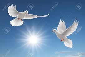 Two White Doves Flying On Clear Blue Sky Stock Photo, Picture And Royalty  Free Image. Image 4621953.