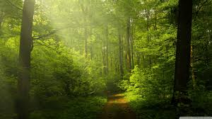 hd wallpapers nature forest.  Nature HD 169 With Hd Wallpapers Nature Forest S