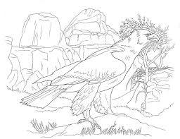 Small Picture 12 Pics Of Desert Bird Coloring Page Arizona Desert Animals