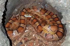 Get To Know The Snakes We Have In Mecklenburg County