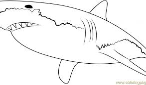 Small Picture Great White Shark Coloring Pages Backgrounds Coloring Great White