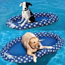 pool floats for dogs.  Floats Dog Pool Float  21 Gifts For People Obsessed With Their Pets Floats Dogs